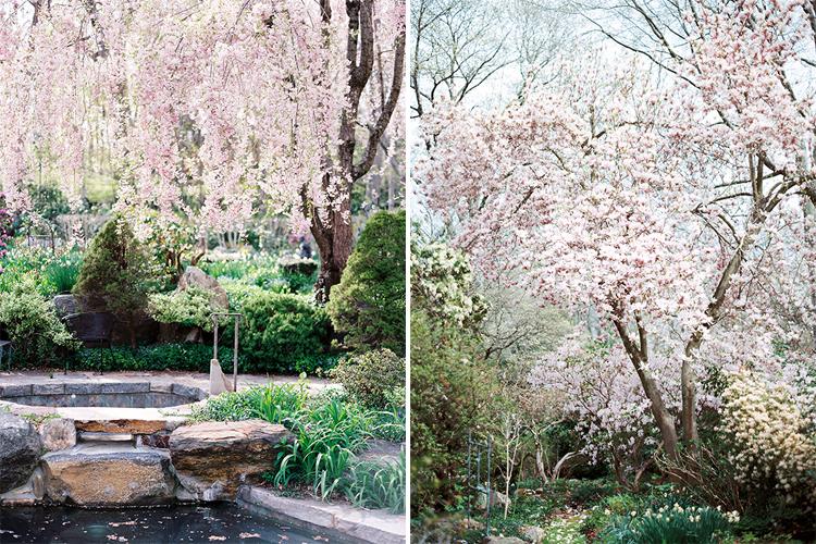 Garden Photography by Cynthia Brown Studio