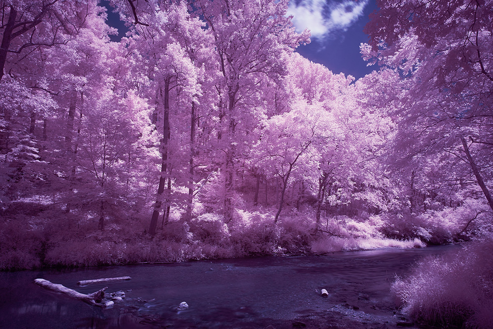 Digital color infrared image with processing in Photoshop