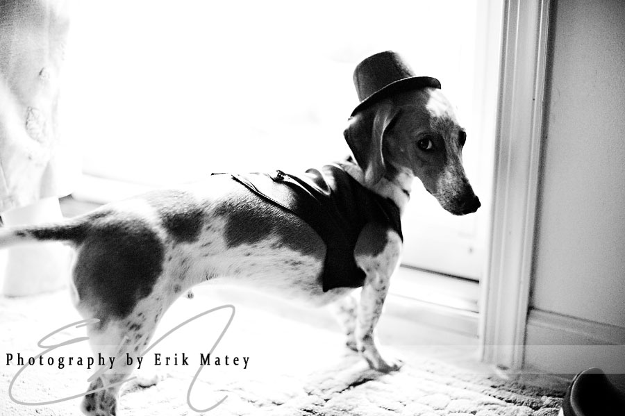 bridal dog