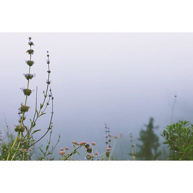 Wild in the Clouds. #MorningHike with @laurenfitzsi was 🙏🏻✨🌲 #Lacanada #TeepeeTrail #OptOutside #GreatOutdoors #Scenic #Landscape #IphoneX #VSCO