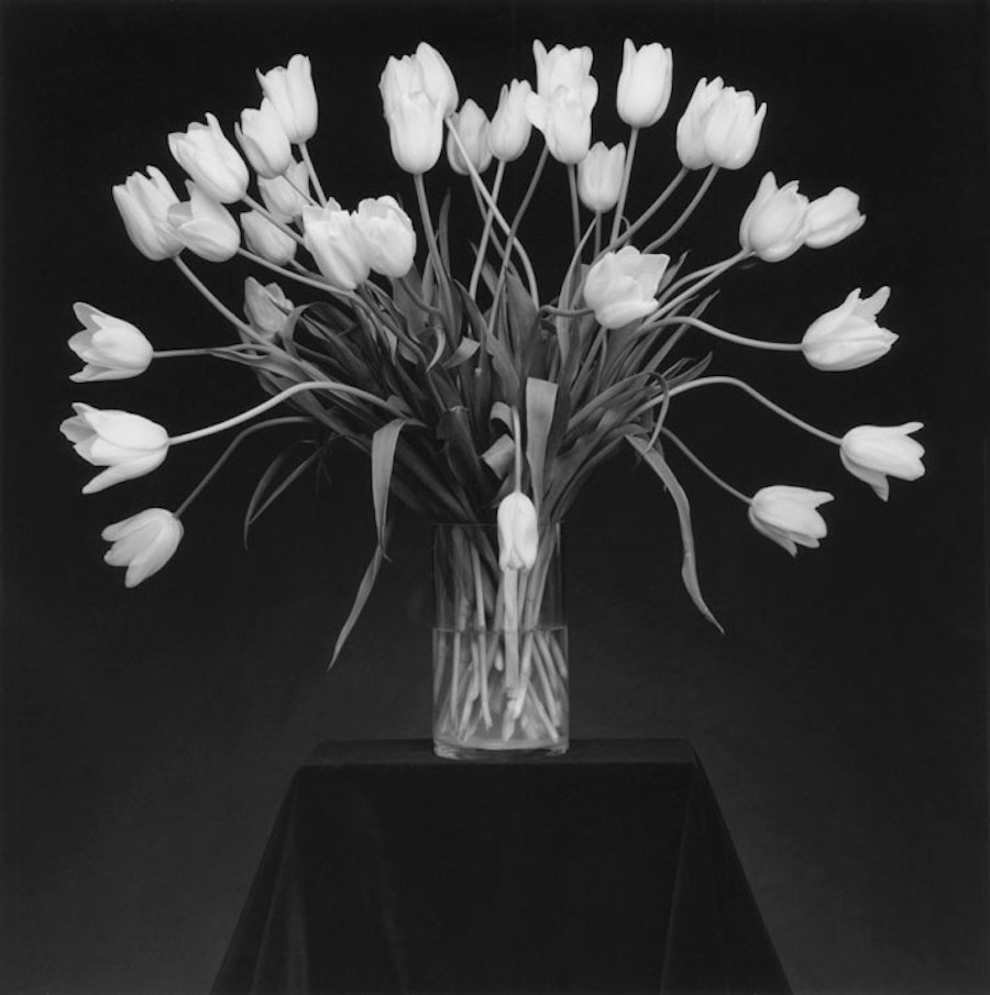 robert-mapplethorpe-Tulips_1988.jpg