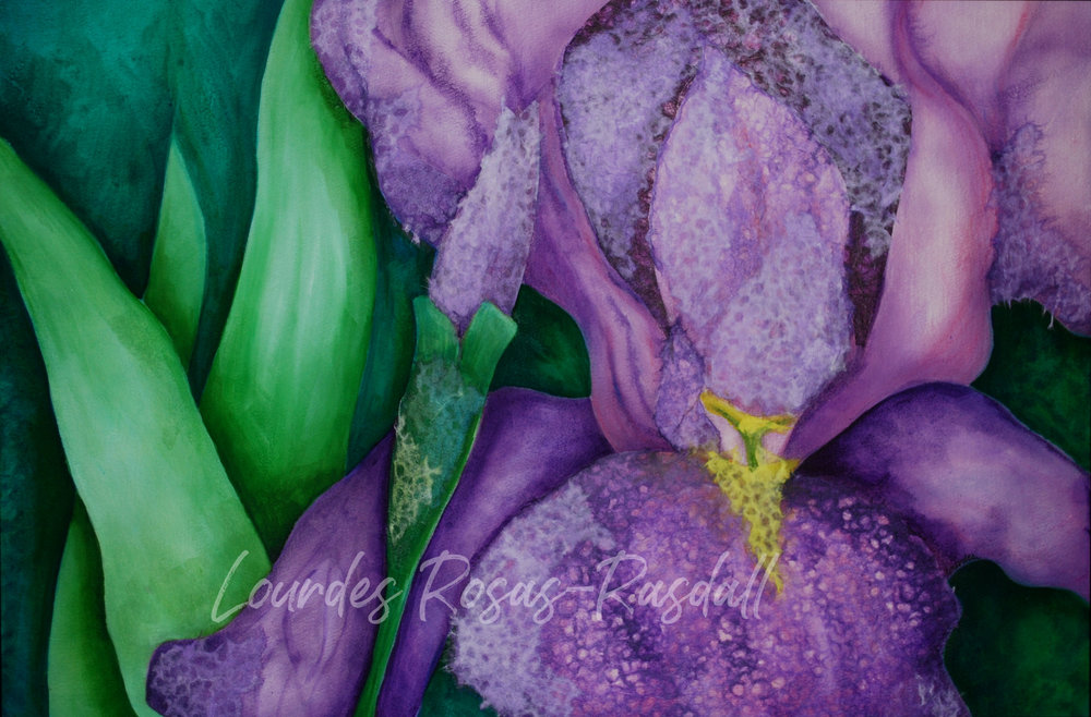 Iris - mixed media | Purple Watercolor Painting by Lourdes Rosas-Rasdall