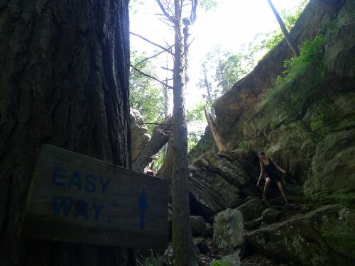 "Honeysuckle negotiates the ""hardway"" The ""easy way"" is a joke sign."