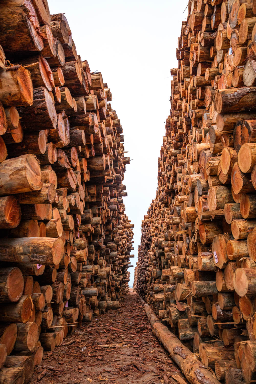 redwoodtrip-1640.jpg