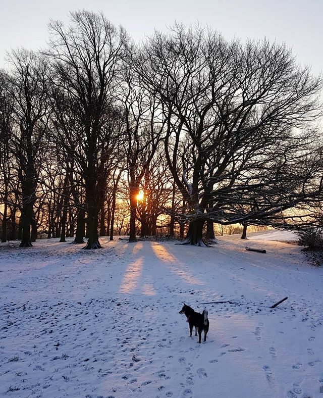 As the #Snow cleans #London's air, take a walk in your nearest park and breath the fresh breeze in! It will energise you for the weekend! ❄️⚡💙 #FridayFeeling #LondonSnow #IshtahLondon | 📷 @pubtails . . . #London #Finchley #Barnet #TurkishRestaurant #MediterraneanFood #turkishfood #londonfood #londonfoodie #londonfoodies #foodie #foodies #londongram #londonrestaurants #finchleycentral #londonboroughofbarnet #londonplaces #londontown #londonlife #northlondon #nature #naturegram #naturelover #naturelovers #sunrise #naturephotography