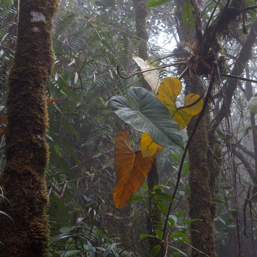 53-Venezuela-0505-P-1304.jpg