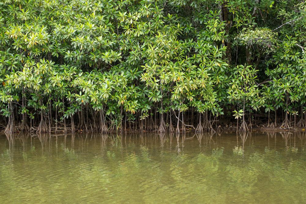 29-Madagaskar-0433-P-1611.jpg