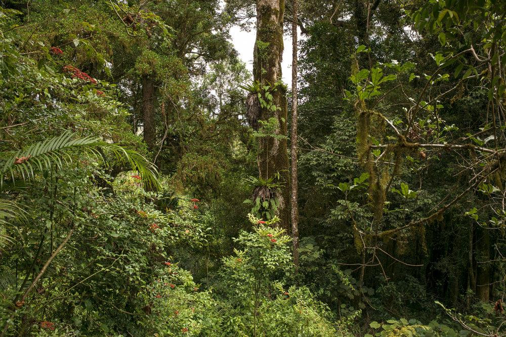 31-Madagaskar-1063-P-1611.jpg