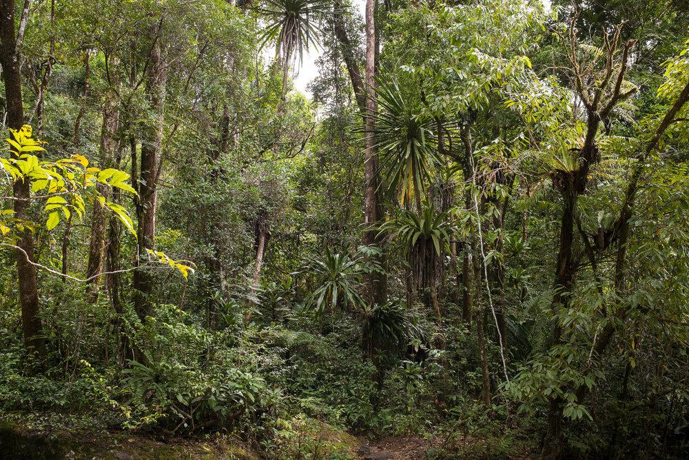 30-Madagaskar-0386-P-1611.jpg