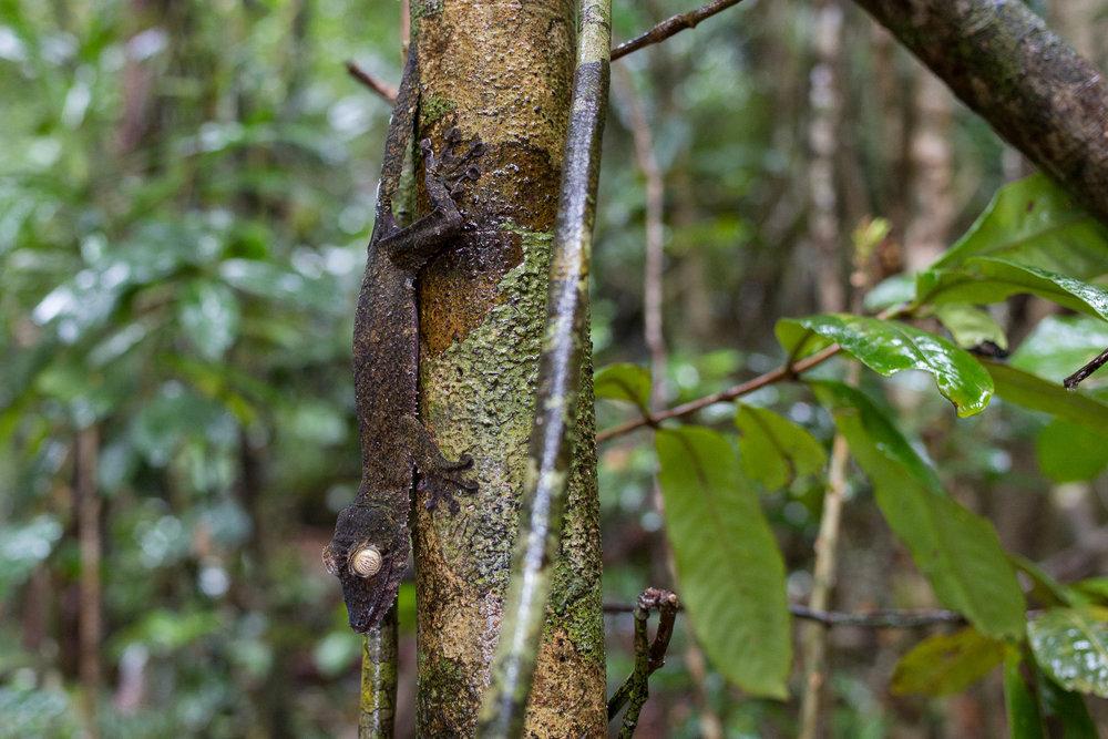 34-Madagaskar-0456-P-1611.jpg