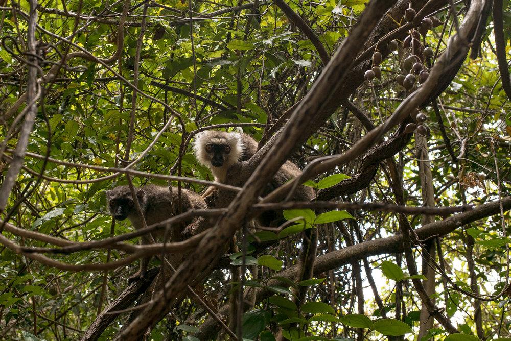 40-Madagaskar-0783-P-1611.jpg