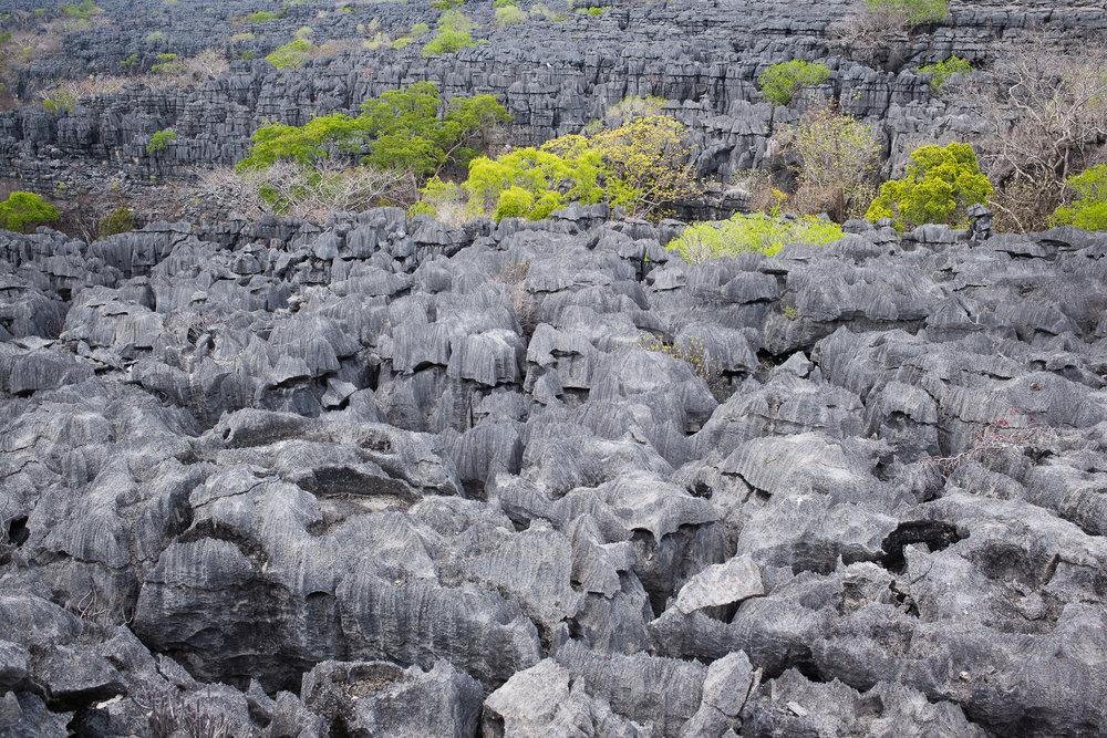 43-Madagaskar-0756-P-1611.jpg