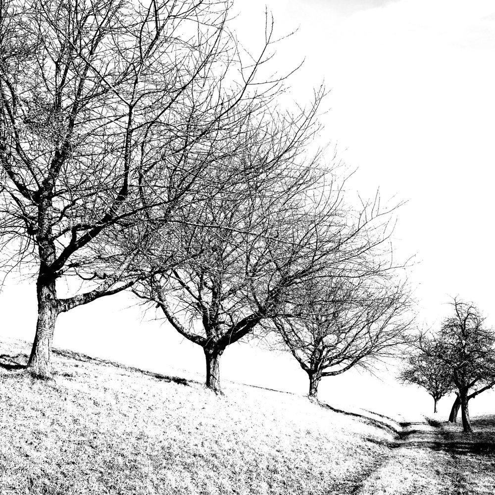jura obstbäume