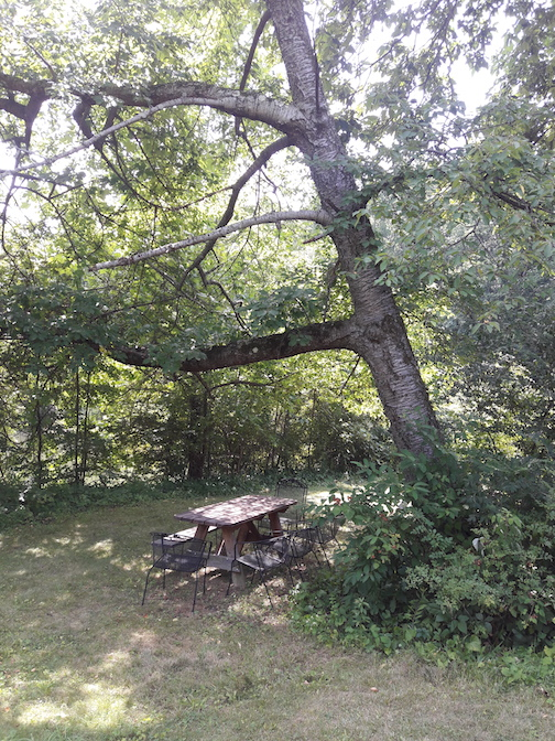tree:table.jpg