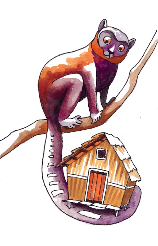 """Lemur's House - """"Lemur's hut is extremely isolated in the tamarind trees. There are plastic bags for mosquito netting, and a hole in the wall for the bathroom. Not in the floor. In the wall."""""""