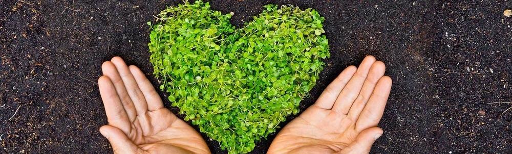 banner_heart2.jpg
