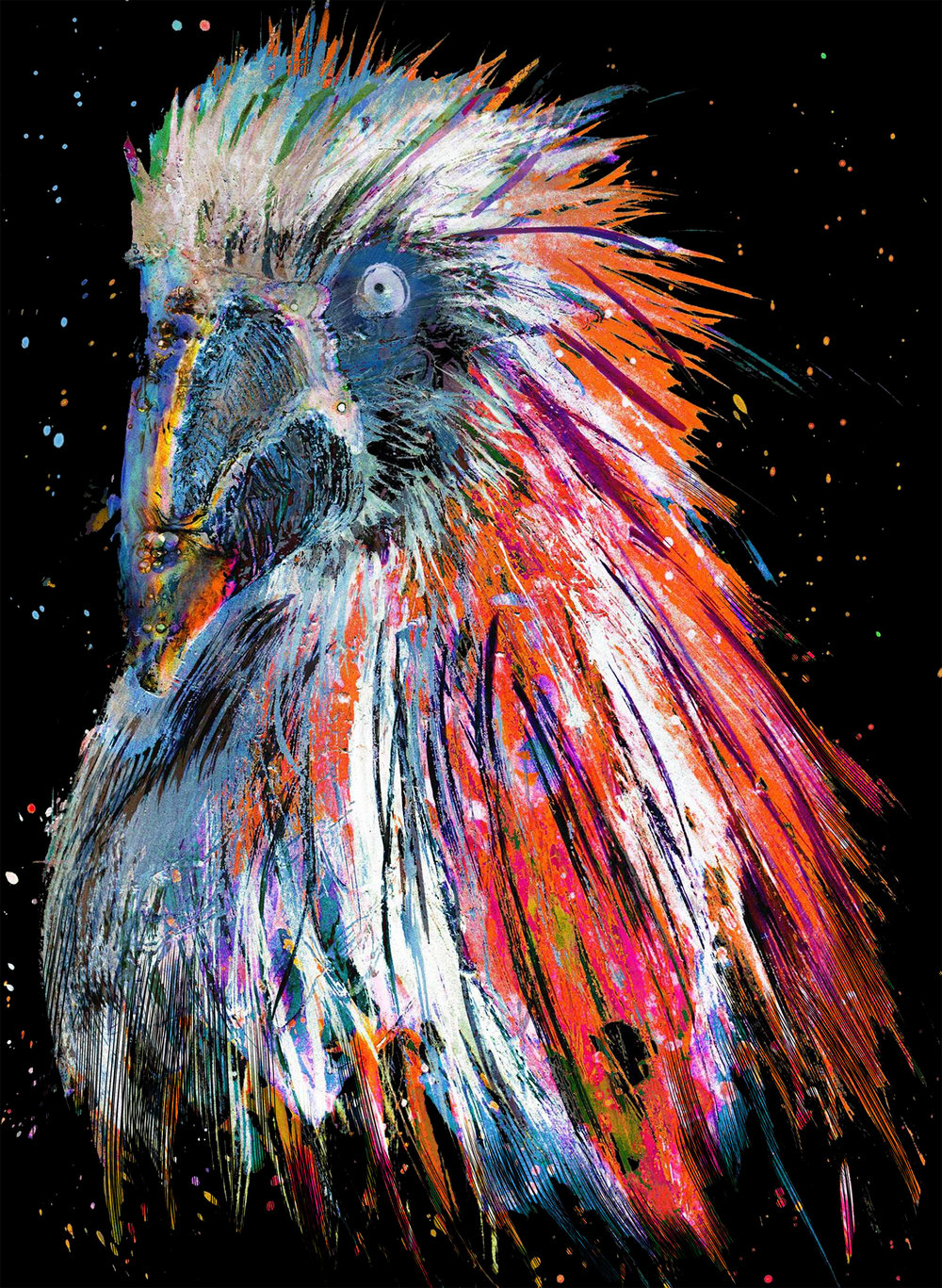 Scarlet Macaw .jpg