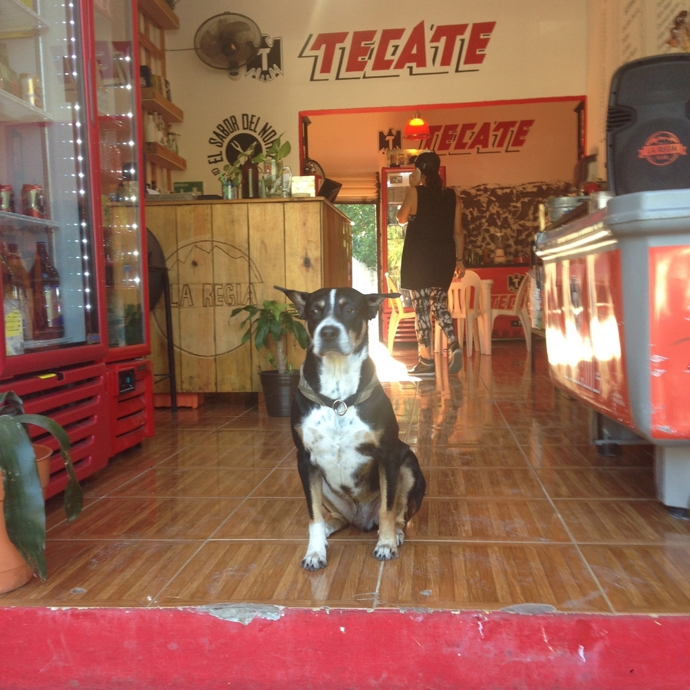 Tecate dog at bar in Tulum Mexico