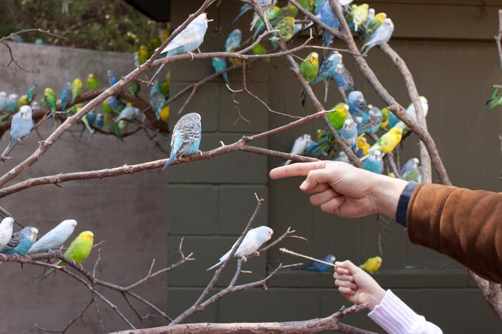 Bird Finger.JPG