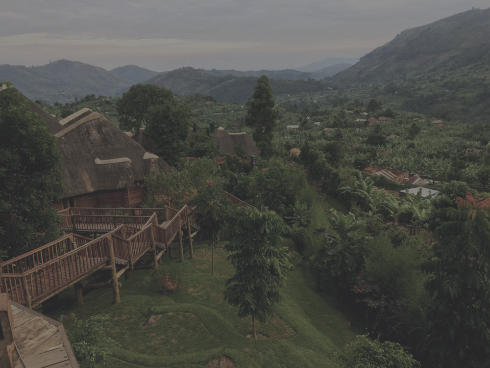 Bwindi National Park.png