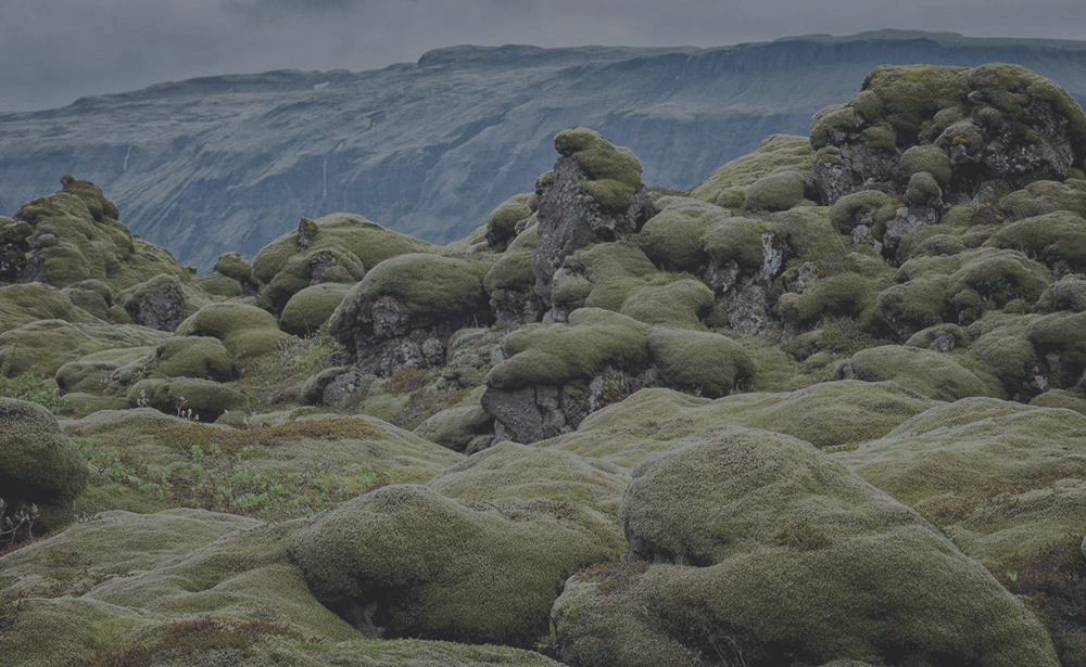 PHOTO: MOSS-COVERED LAVA FIELDS