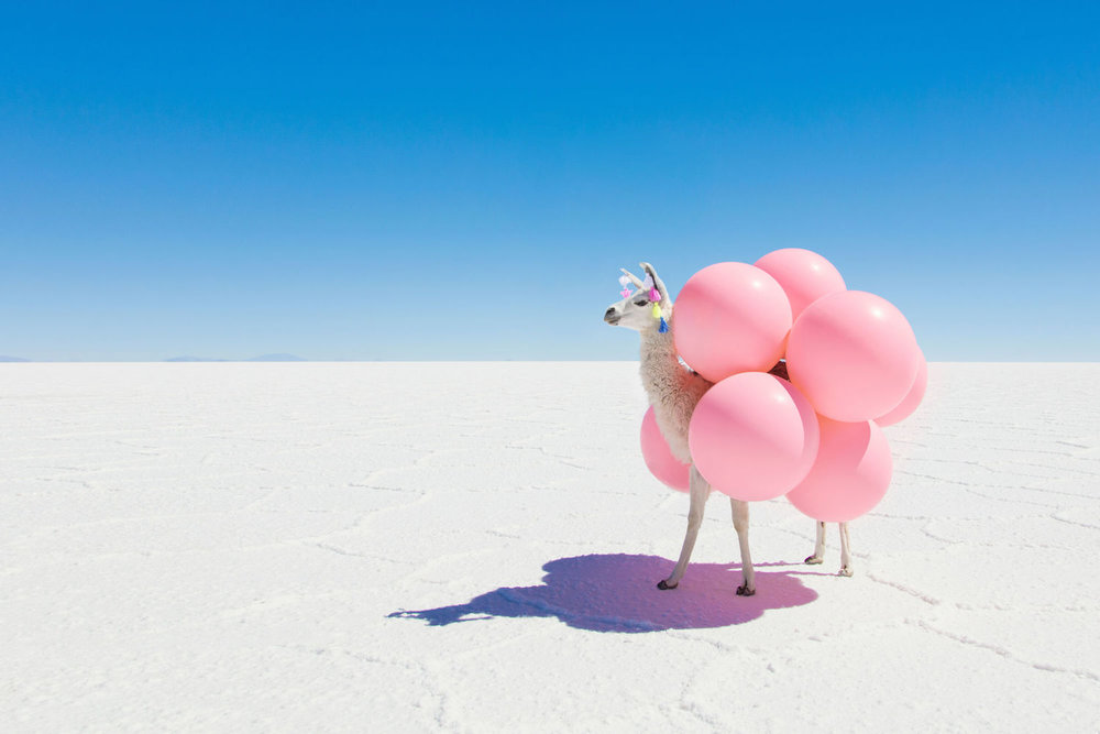 LLAMA WITH PINK BALOONS,  FAR FAR AWAY