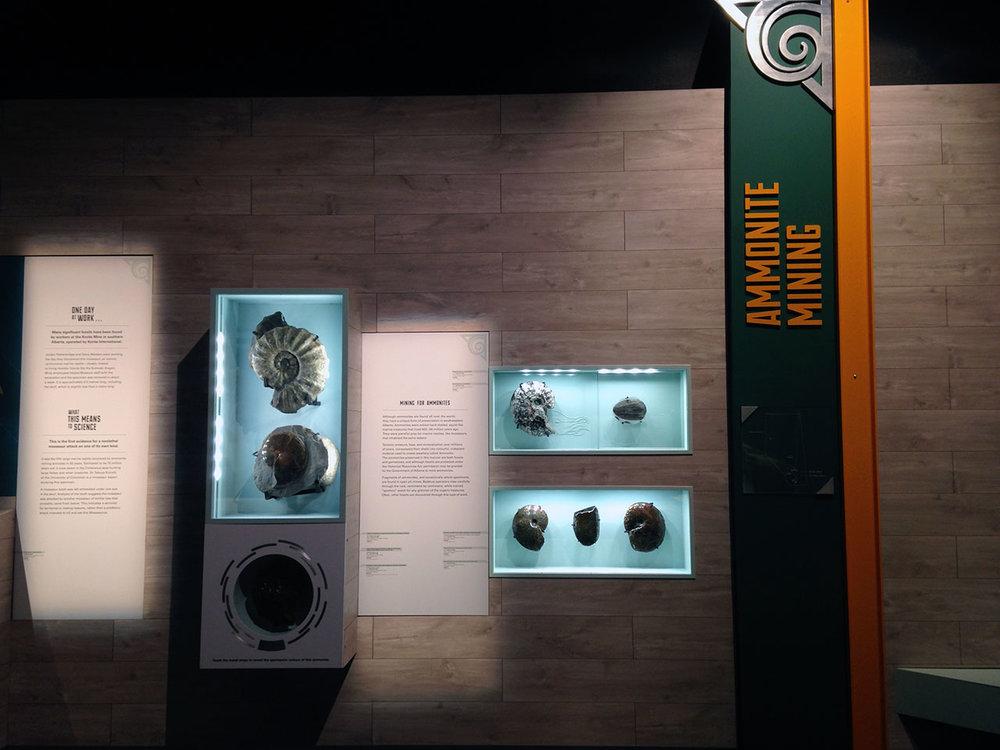 GFD_ammonites.jpg