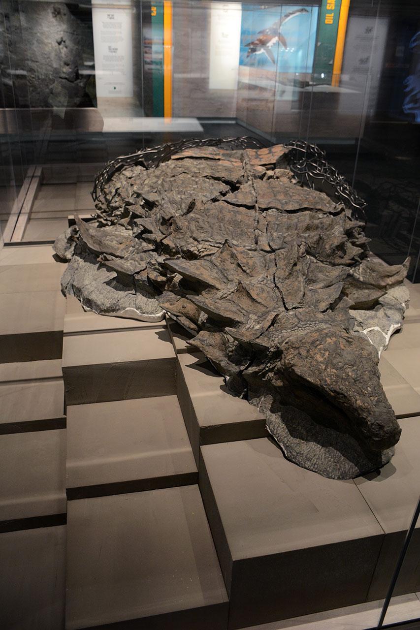 GFD_nodosaur.jpg
