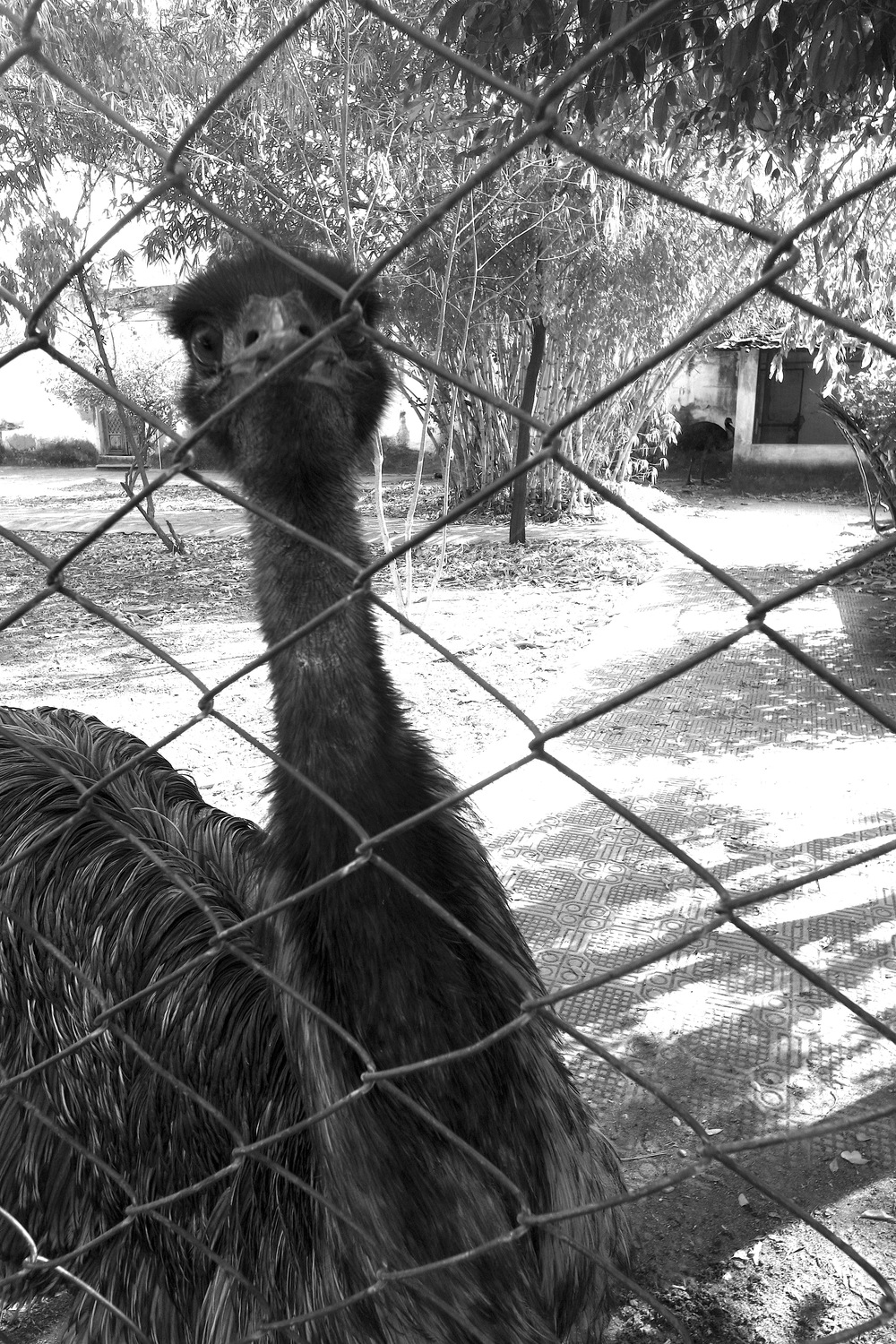 Keep your distance from the emu, part of the menagerie at Udai Bilas Palace