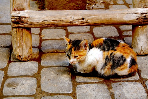 The Cats of Marrakech — The Not So Innocents Abroad