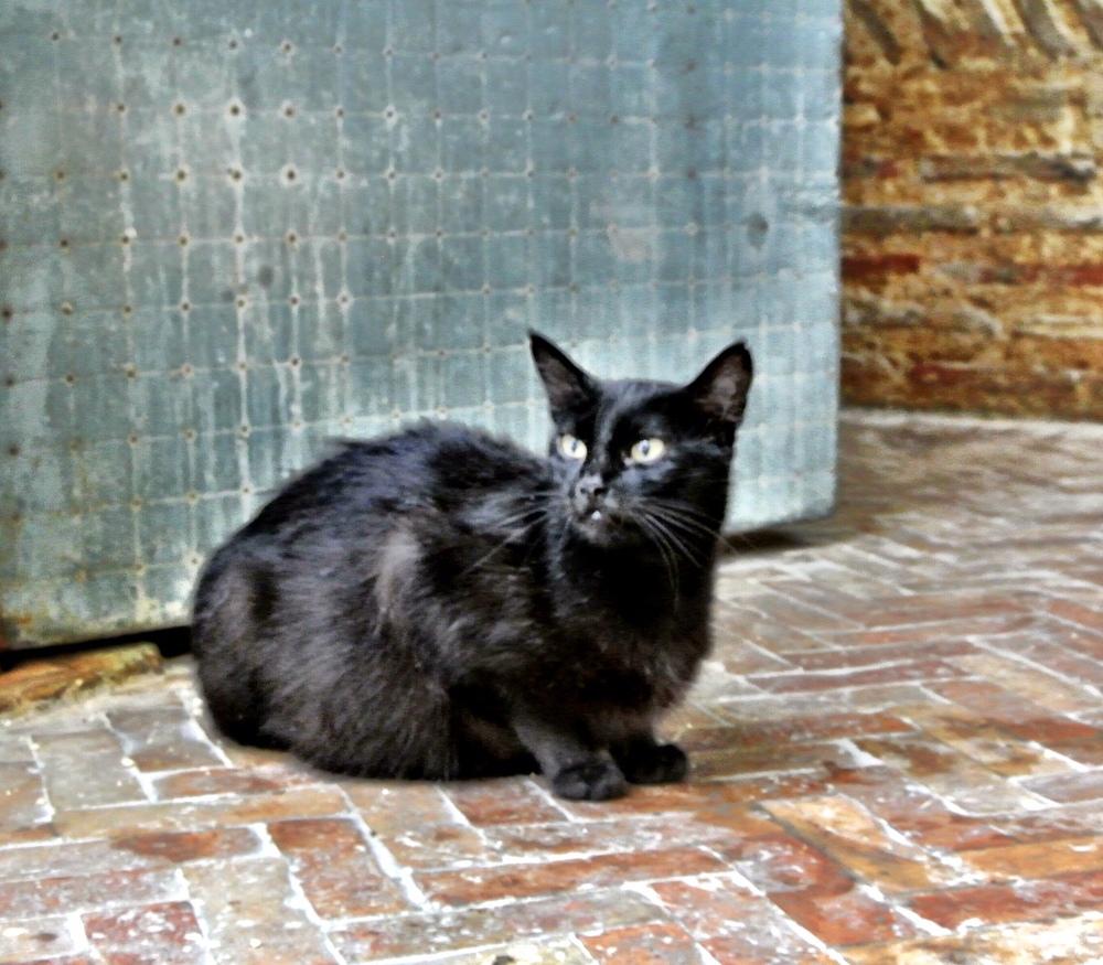 catblack.JPG