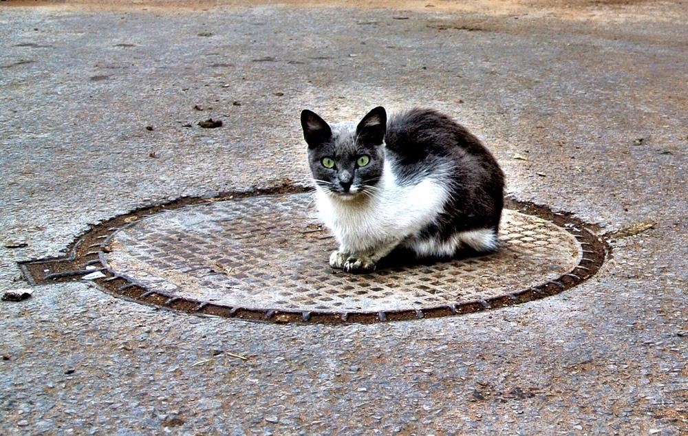 catcircle.JPG