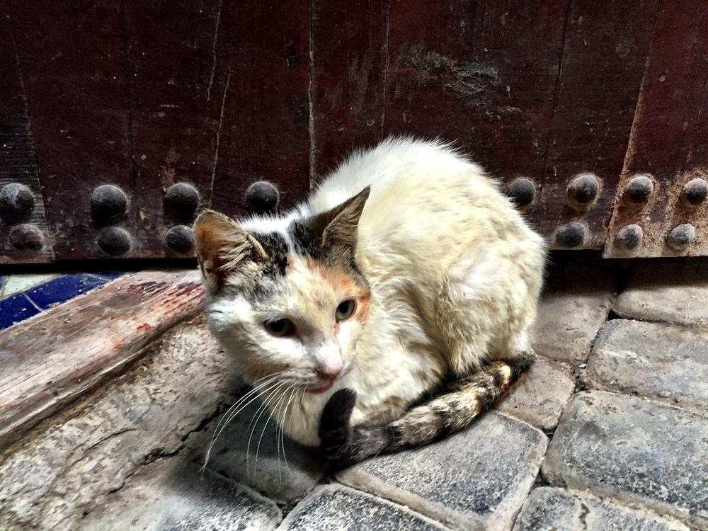 catdoor.JPG
