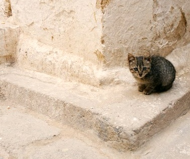 Cute kitties appear around every corner you turn in the medina of Fès
