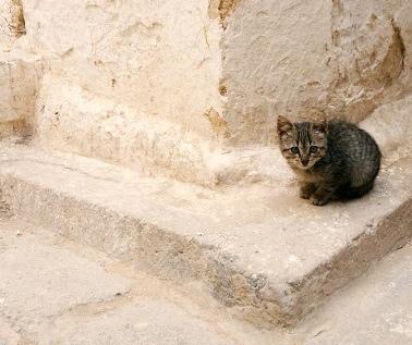 Cute kitties appear around every corner you turn in the medina of Fès