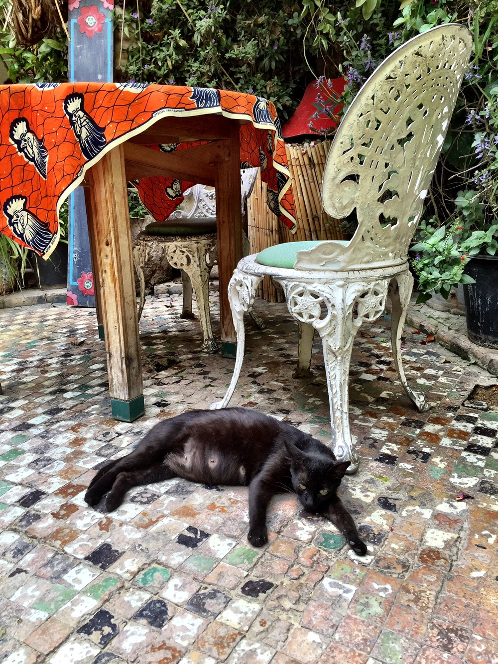 Madrigal lounges in the courtyard by a table. She has since given birth to a litter of kittens