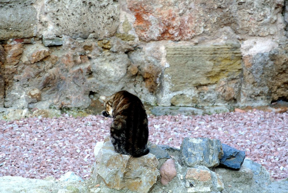 A cat preens itself within the ruins of a Roman Theatre beneath the Alcazaba fortress