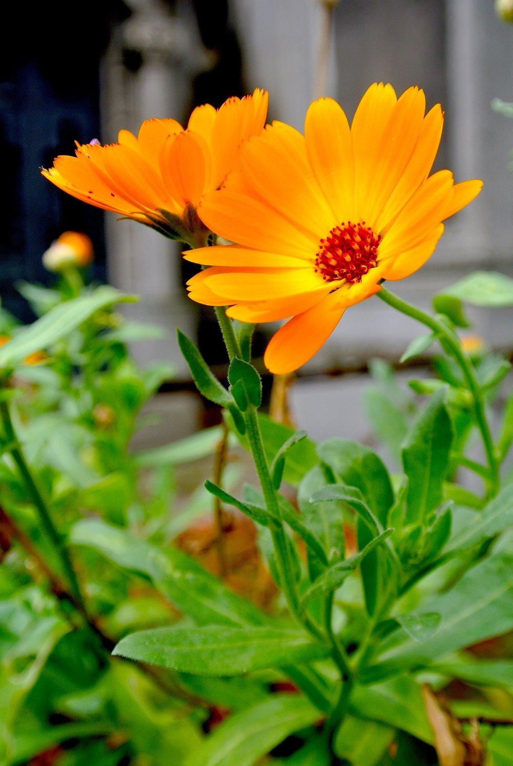 flowerslachaise.JPG
