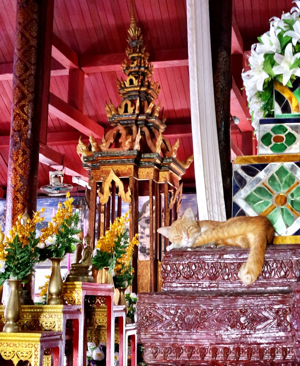 Cats aren't that common in Chiang Mai, but we found one resting in the second viharn, or prayer hall