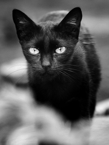 I love black cats…but some cultures believe them to be harbingers of death — especially if one meows at midnight