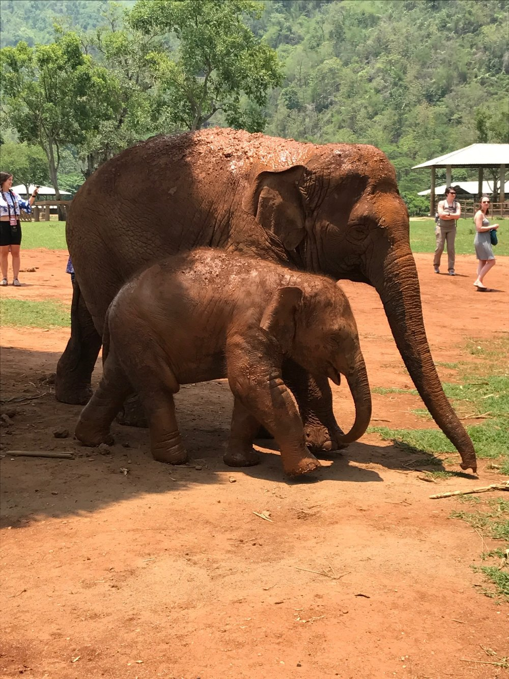 Instead of patronizing an operation that offers elephant rides or tricks, go to a sanctuary like the Elephant Nature Park outside of Chiang Mai, Thailand, which rescues abused elephants