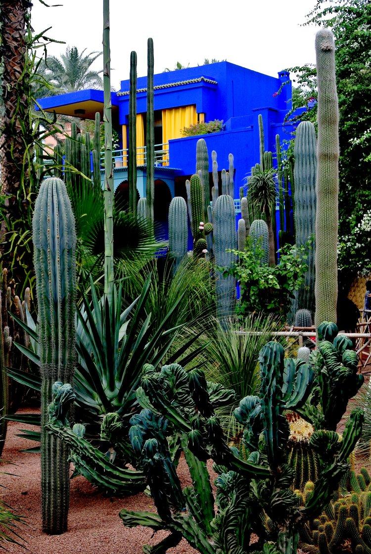 escape the chaos of the medina for a calming visit to le jardin majorelle - Majorelle Garden