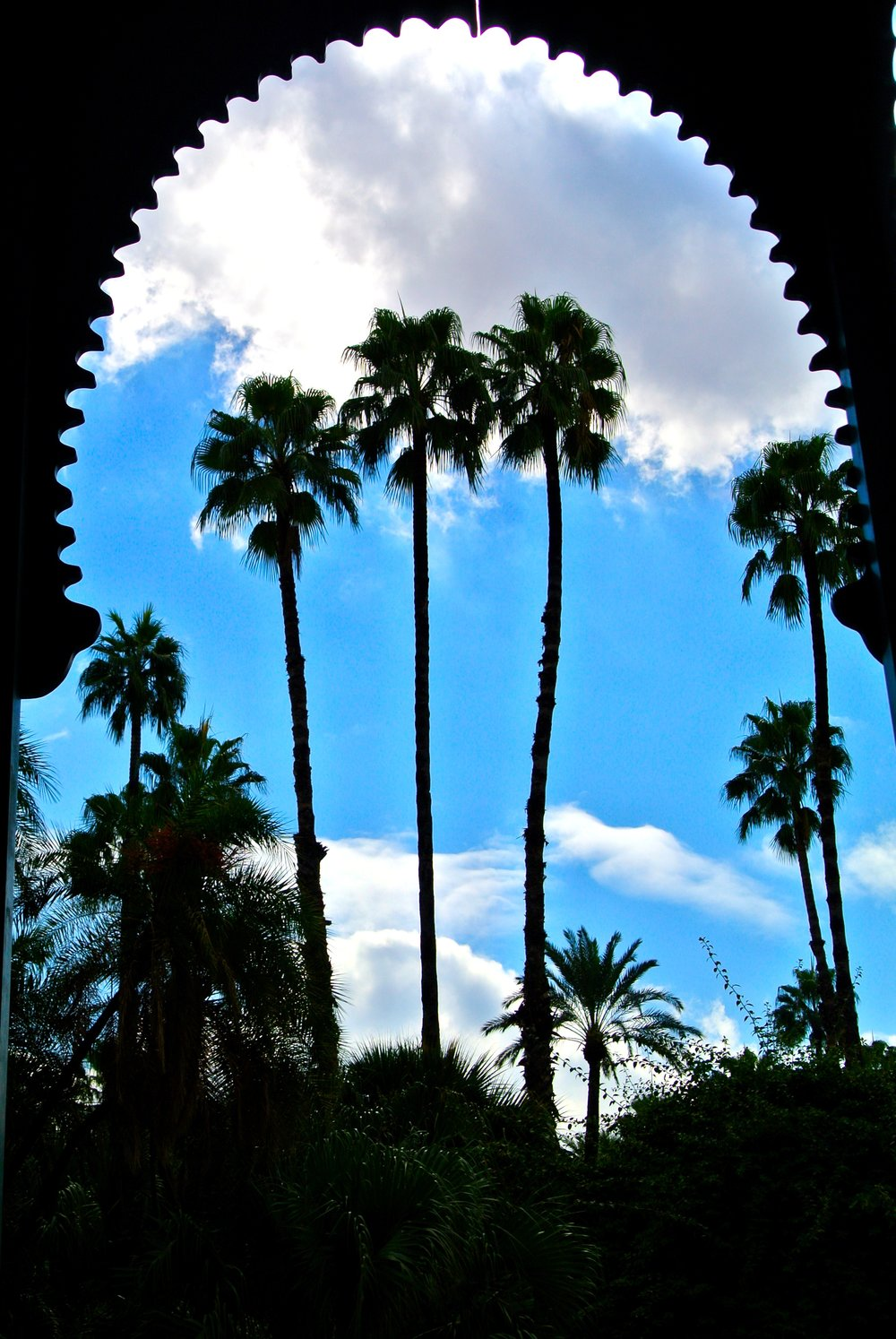 Towering palms seen through an archway