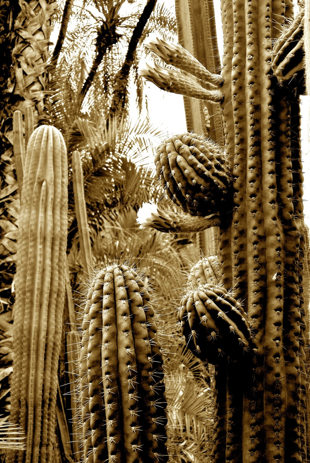 Drought-tolerant cacti make up the majority of plants at the Majorelle Garden