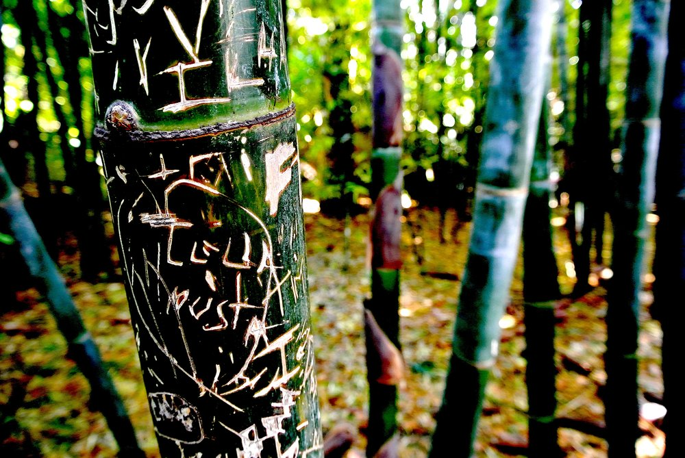 Visitors past have left their mark in the bamboo section of the garden