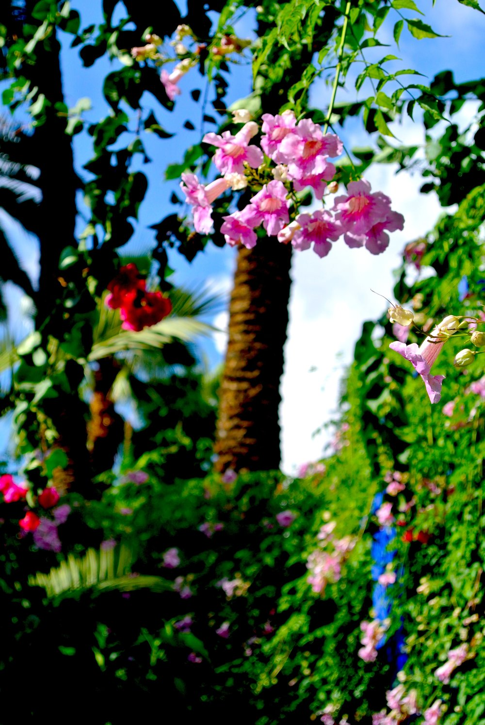 The garden is mostly green with periodic bursts of pink and red