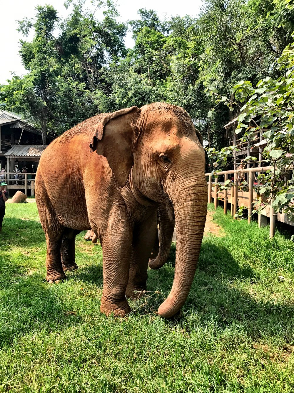 It's heartbreaking to think how much these elephants suffered before their idyllic life in the sanctuary