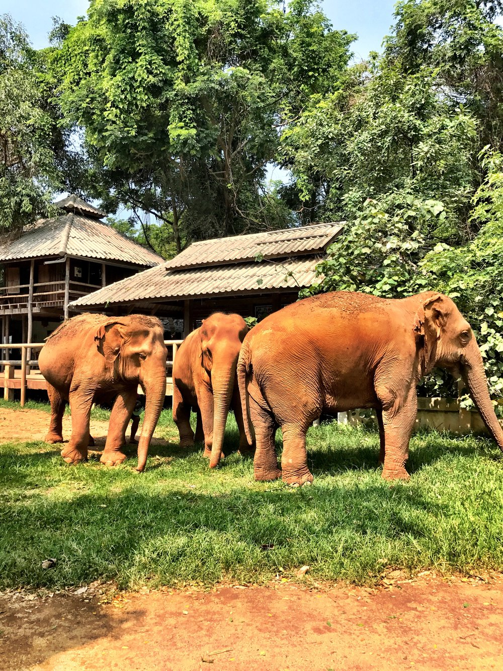 Spend a day at the Elephant Nature Park to feed, bathe and get to know rescued elephants