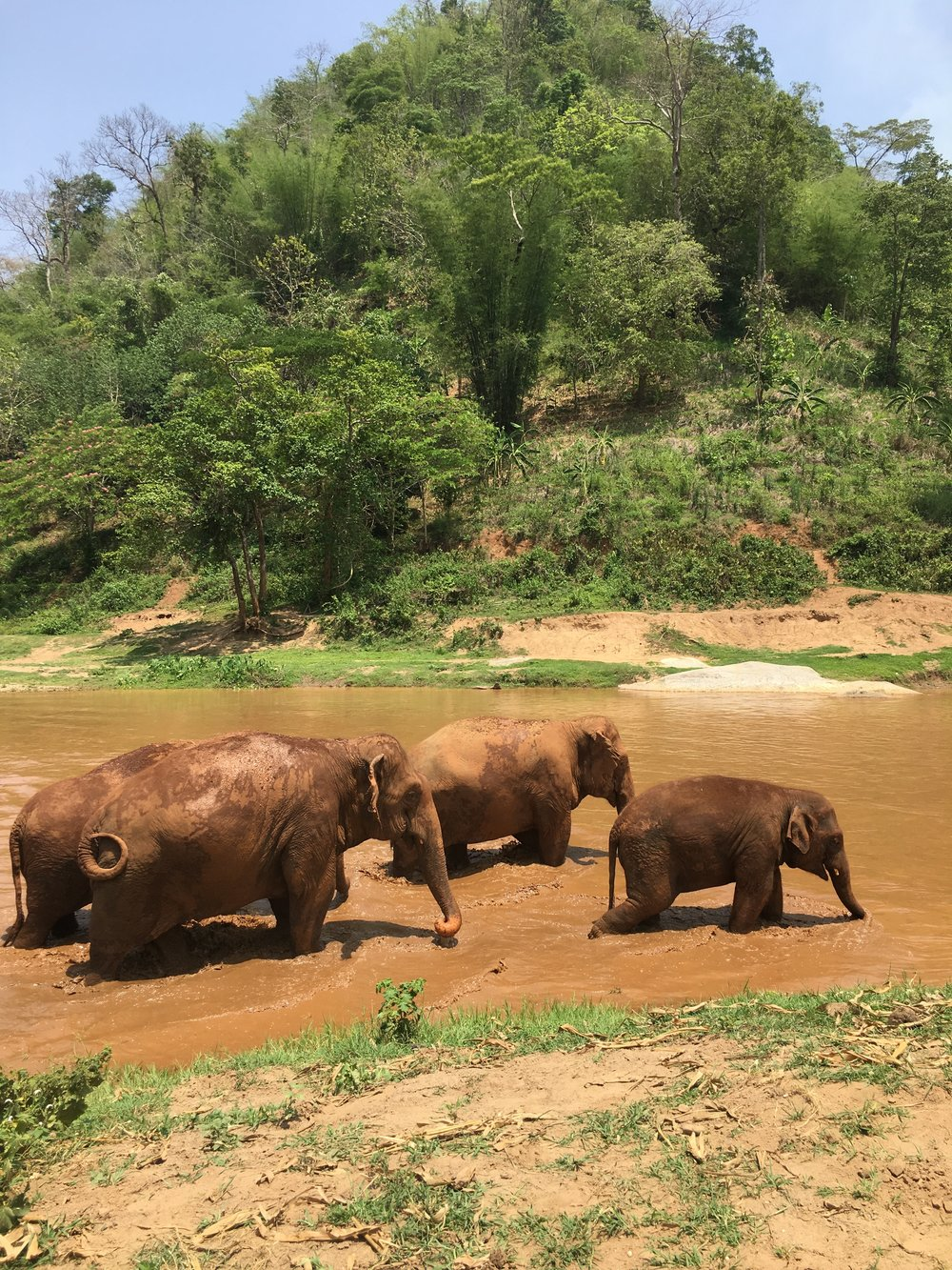 When you join the elephants in the river, be advised that the muddy water can stain your clothes