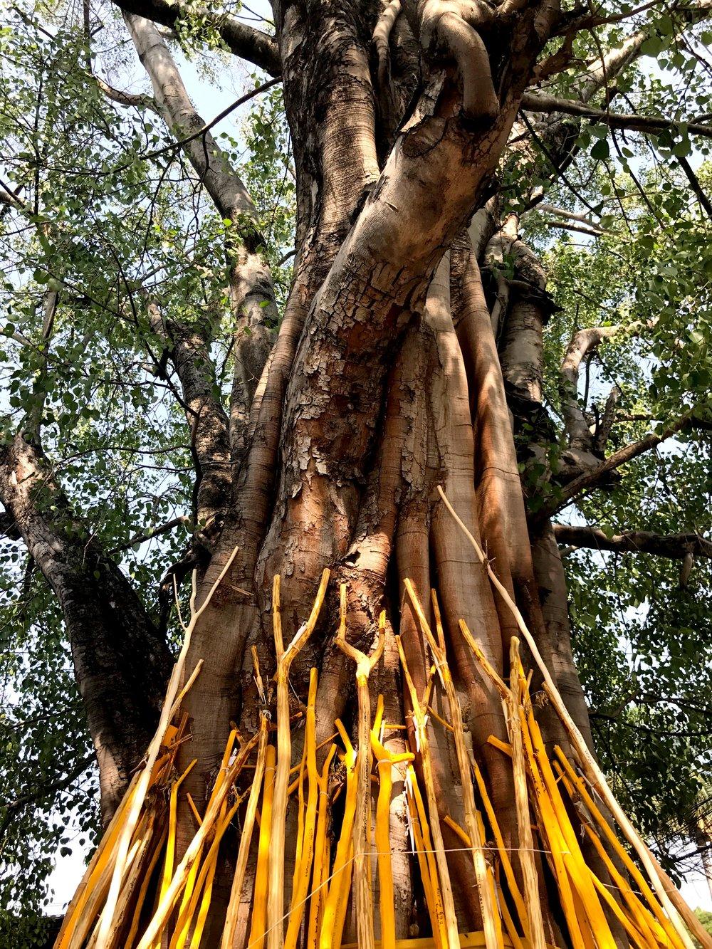 sacredtree.JPG